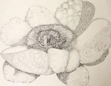 Peony Flower A